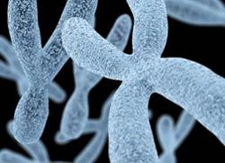 Исследование ДНК