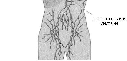 Лечение воспаления лимфоузлов в паху