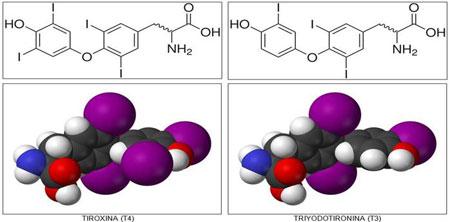 Нормы гормонов T3 и T4