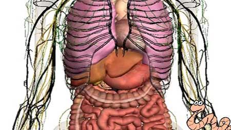 В каких органах могут обитать глисты
