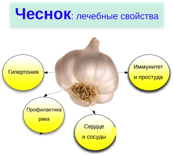 чеснок лечебные свойства от паразитов