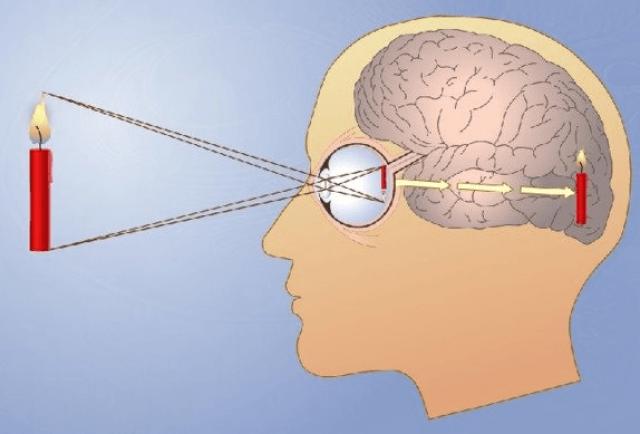 Формирование зрительного образа предмета