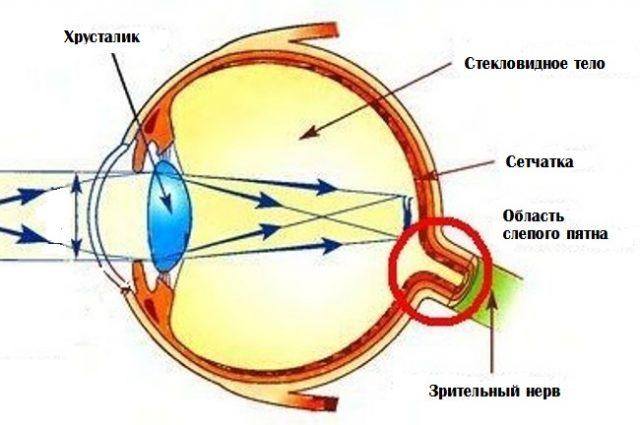 Оптические среды глаза