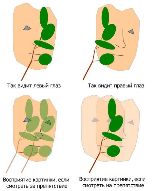 Схема бинокулярного зрения