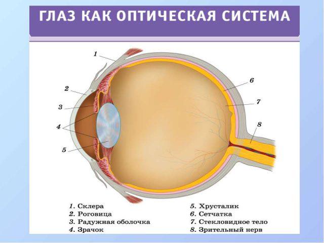 Строение оптической системы глаза