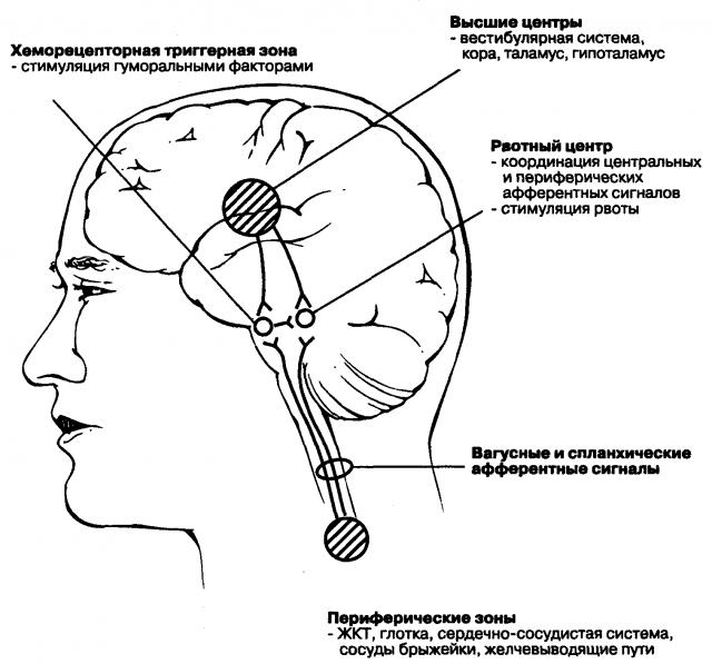 Нервные центры мозга (схема)