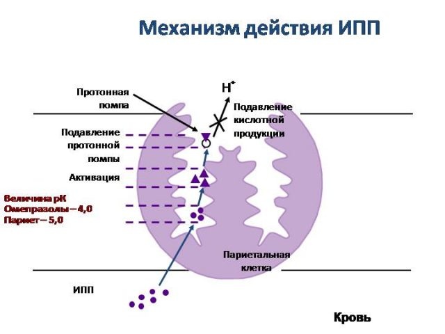 Механизм действия ингибиторов протонной помпы (схема)