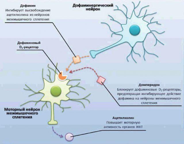 Механизм противорвотного действия домперидона (схема)