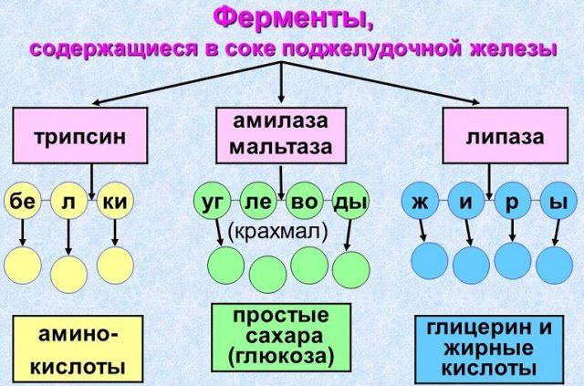 Ферменты поджелудочной железы (схема)