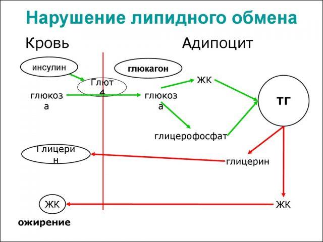 Обмен веществ при ожирении (схема)