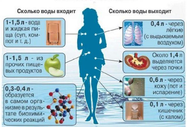 Поступление и выделение жидкости из организма