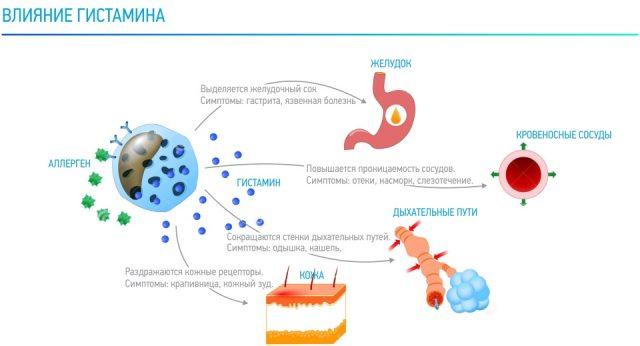 Эффекты гистамина