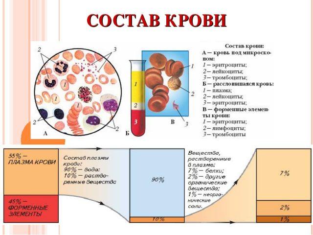 Состав крови (схема)