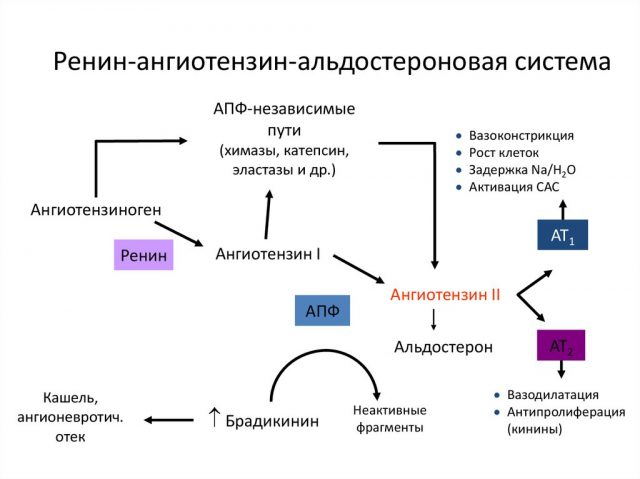 РААС (схема)