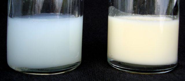 Переднее и заднее молоко