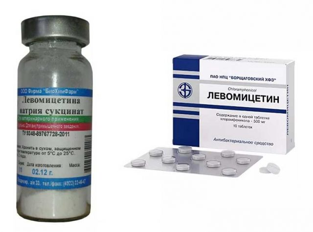 Левомицетин (таблетки и порошок для инъекций)