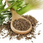 Фенхель — растение и семена
