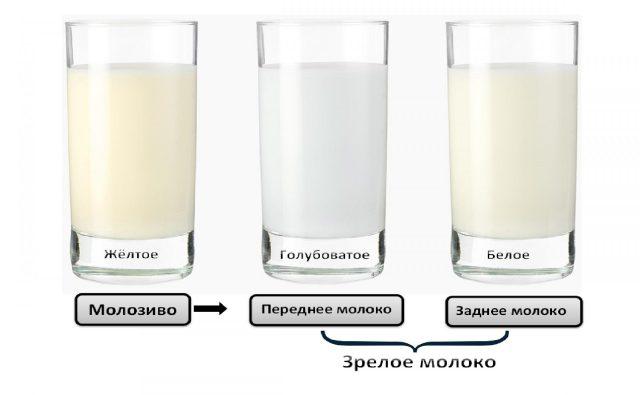Цвет молозива и зрелого грудного молока