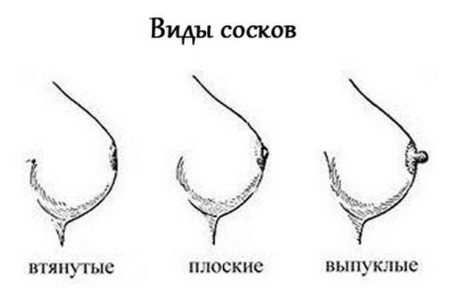 Виды женских сосков