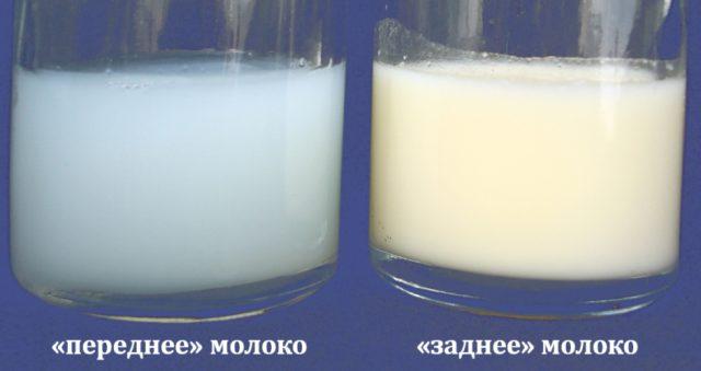 «Переднее» и «заднее» грудное молоко