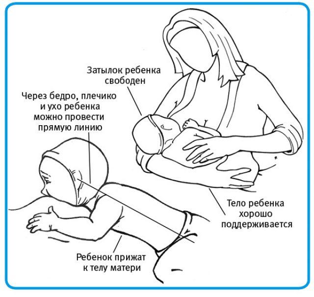 Верное расположение ребёнка во время кормления