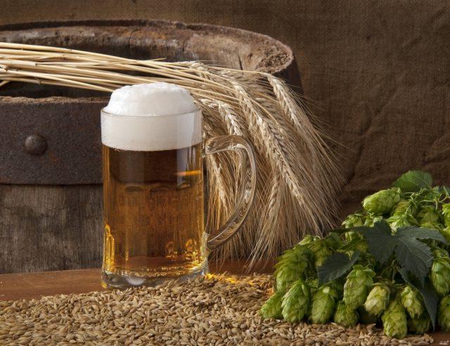 Бокал пива, ячмень и хмель