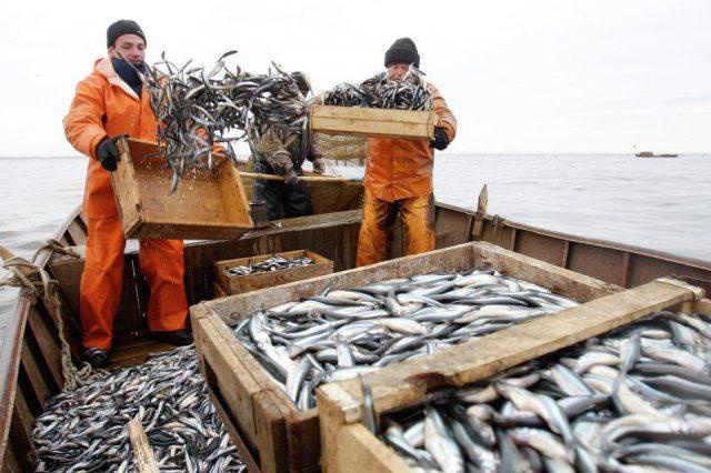 ловля рыбы промышленная