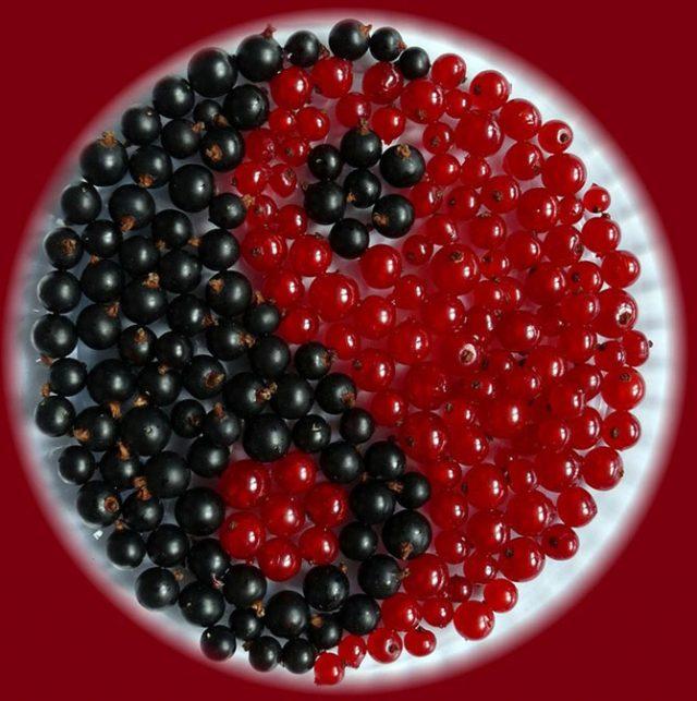 Чёрная и красная смородина