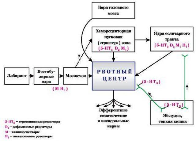 Механизм противорвотного действия Метоклопрамида