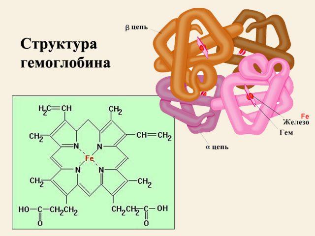 Гемоглобин (схема)
