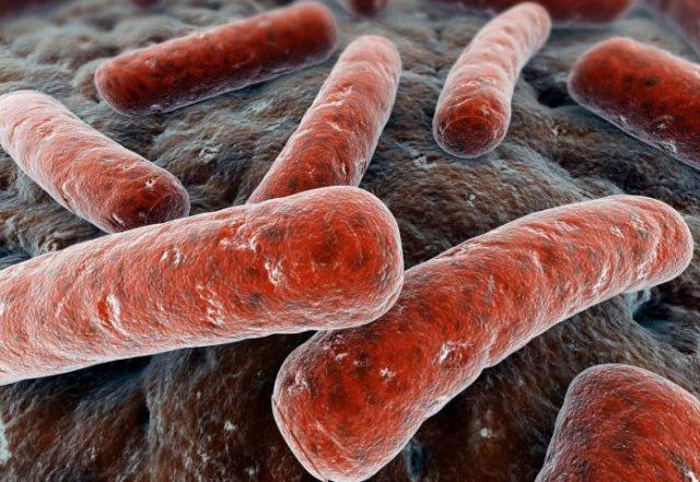 Палочки Коха под микроскопом