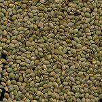 Семена крапивы