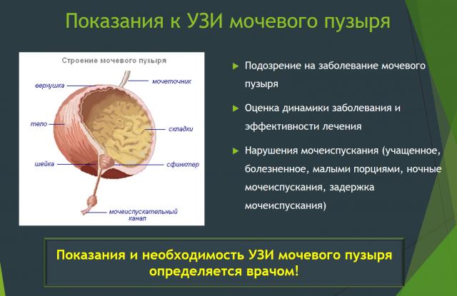 Показания к УЗИ мочевого пузыря