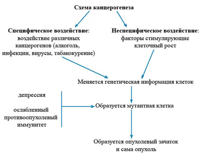 Канцерогенез — формирование опухоли (схема)