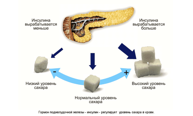 Эффект инсулина на обмен глюкозы (схема)