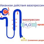 Схема влияния вазопрессина