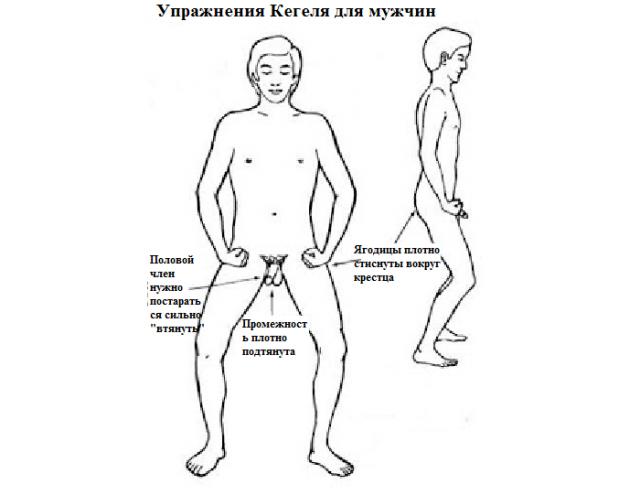 Техника выполнения упражнения Кегеля для мужчин