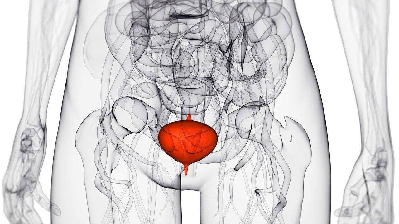 Препараты для лечения мочевого пузыря у женщин