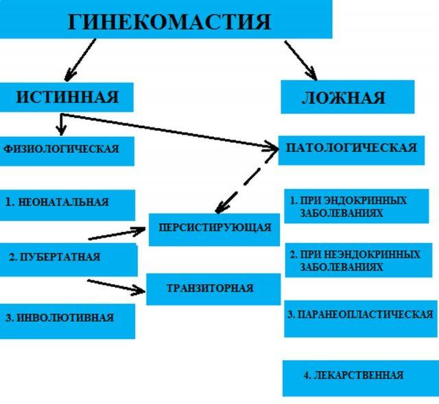 Классификационная схема гинекомастии