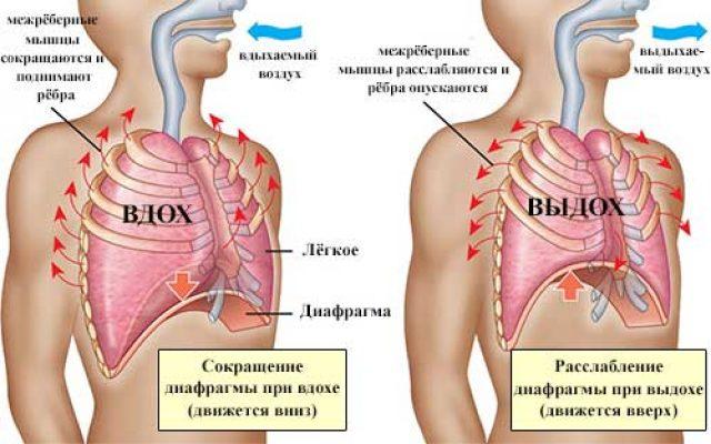 диафрагмальное (брюшное) дыхание