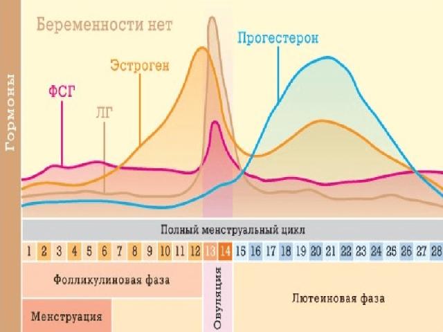 Графики выработки гормонов в полном менструальном цикле