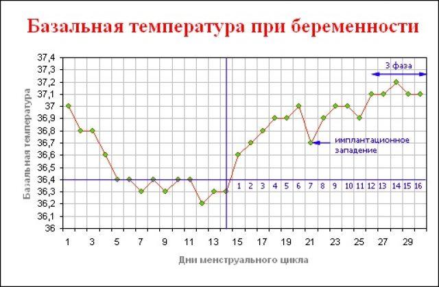 График базальной температуры на протяжении менструального цикла и после оплодотворения