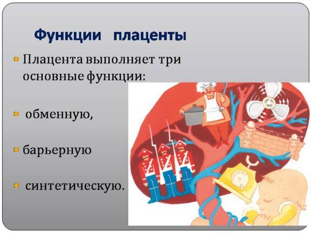 Основные функции плаценты на рисунке
