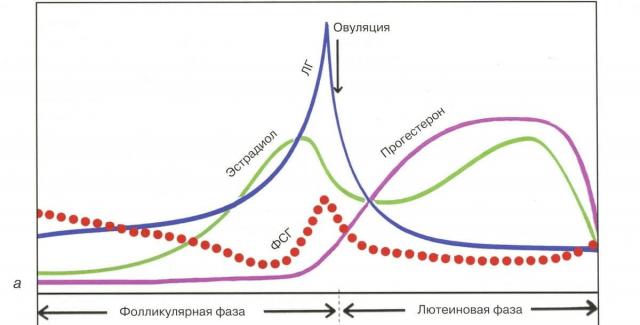 Гормоны во время менструального цикла