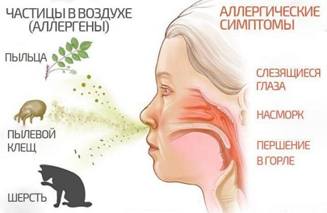 Основные аллергены, которые вызывают заложенность носа, и аллергические симптомы