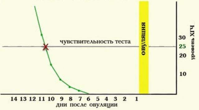 Зависимость уровня ХГЧ от дня после зачатия