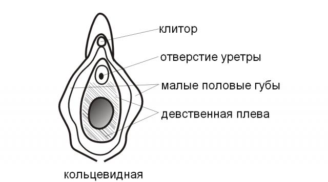Расположение девственной плевы во влагалище