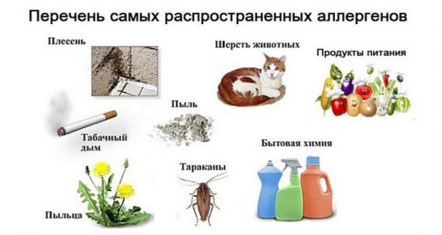 Изображения самых распространённых групп аллергенов