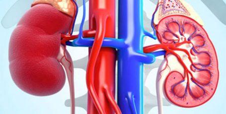 Гломерулонефрит: формы, диагностика, симптомы и лечение
