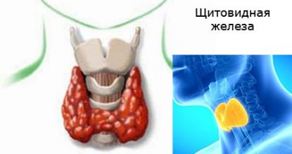 Гормоны щитовидной железы: норма у женщин, таблица